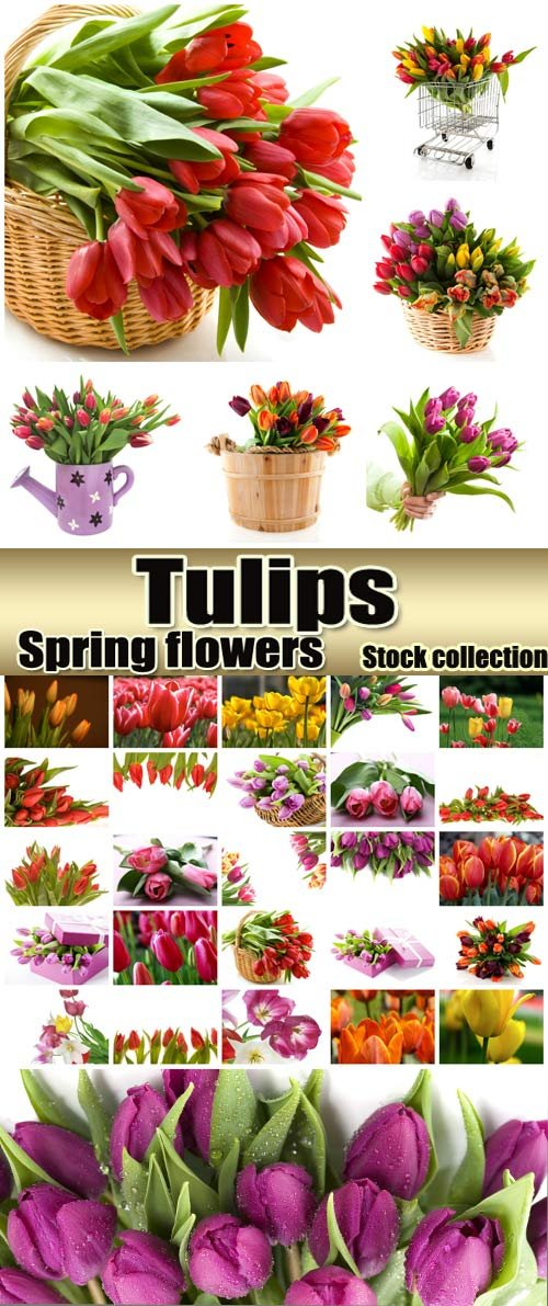 Beautiful spring flowers tulips - stock photos