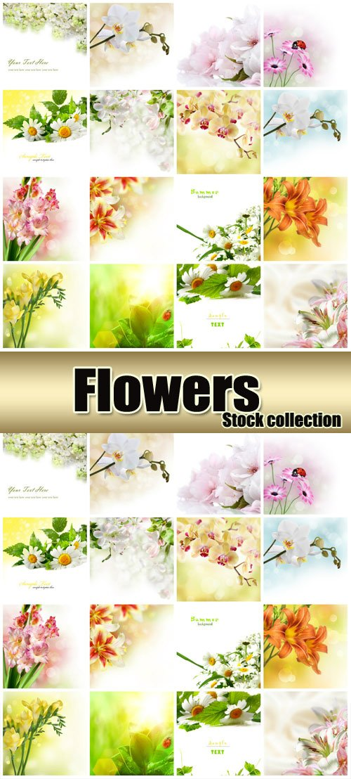 Beautiful flowers, daisies, orchids, lilies, gladioli - stock photos