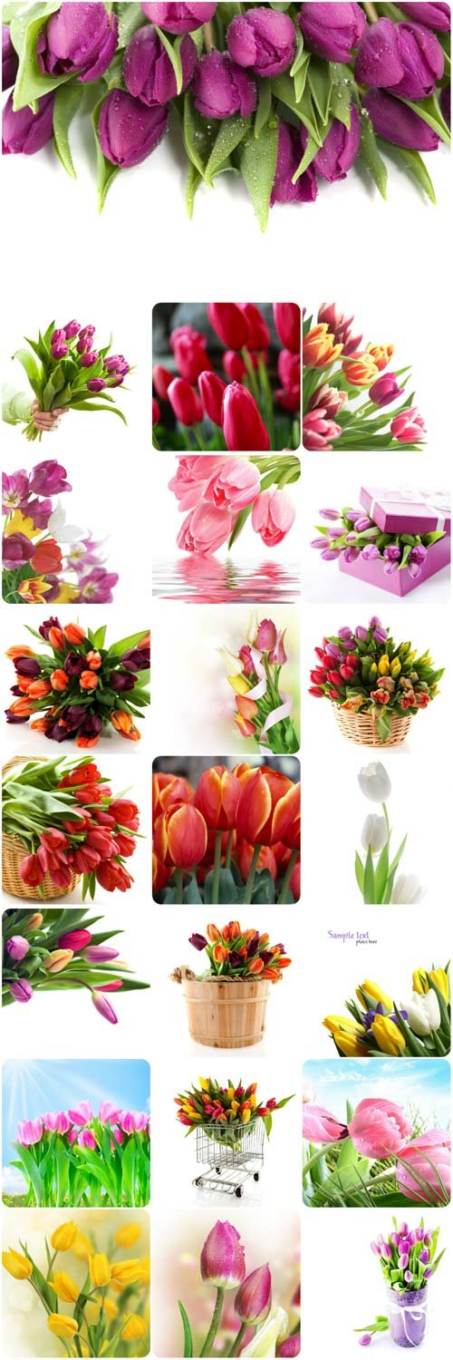 Gorgeous tulips stock photos