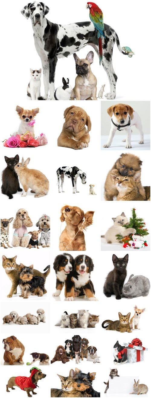 Cute pets raster graphics