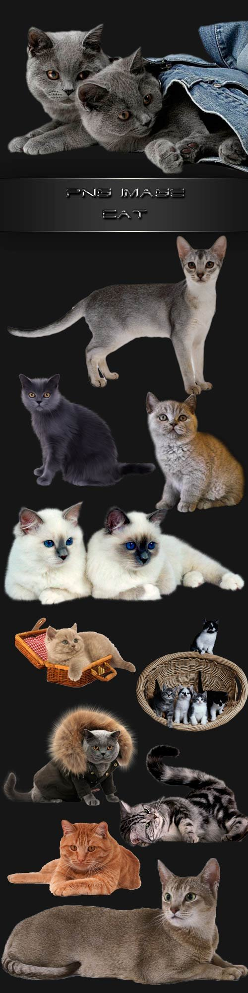 PNG clipart  Cats