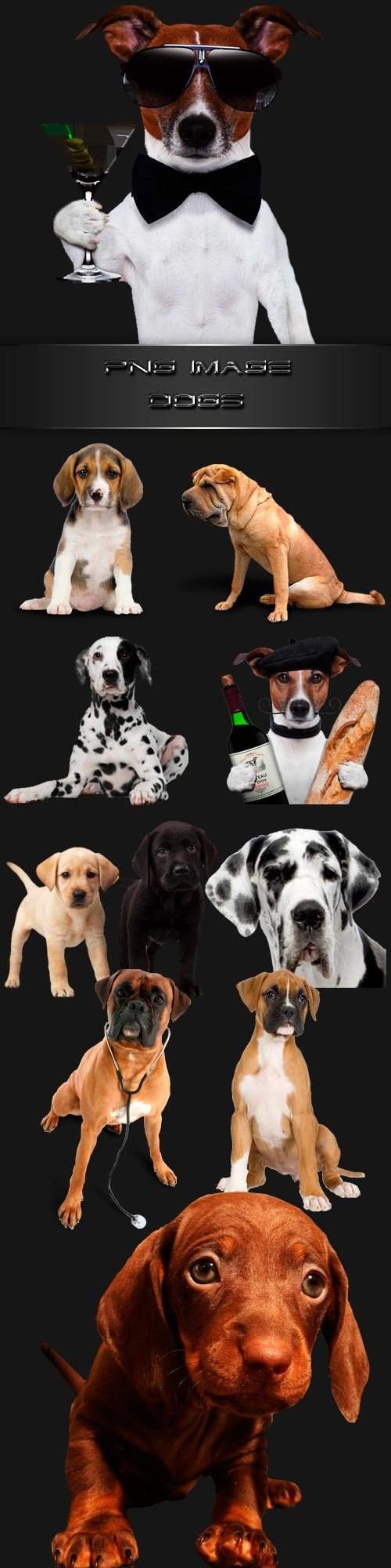 PNG clipart Dogs