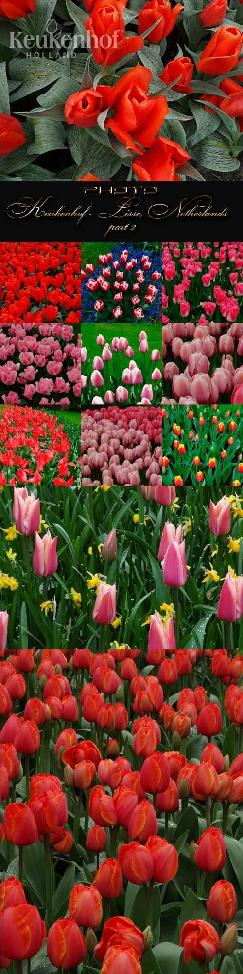 Keukenhof - Lisse, Netherlands part 2