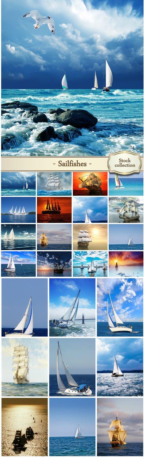 Sailfishes marine backgrounds - stock photos