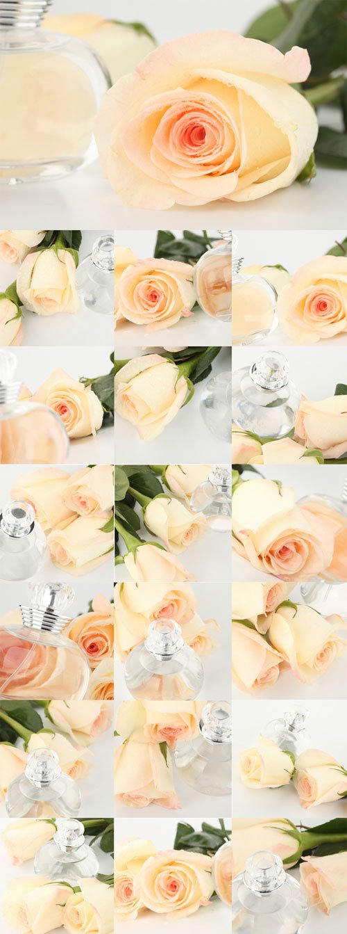 Delicate white roses Aroma
