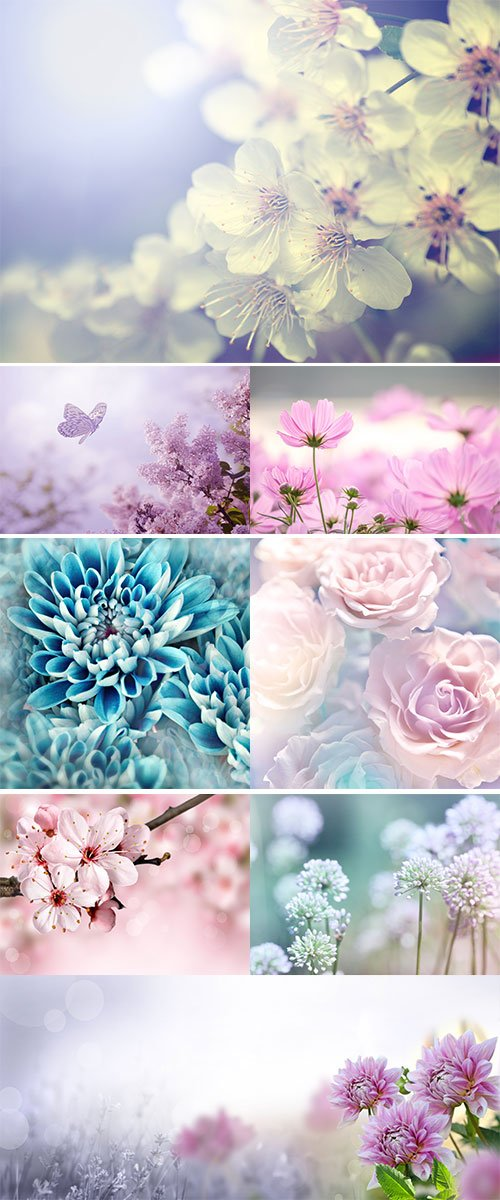 Stock Images - Beautiful  flowers