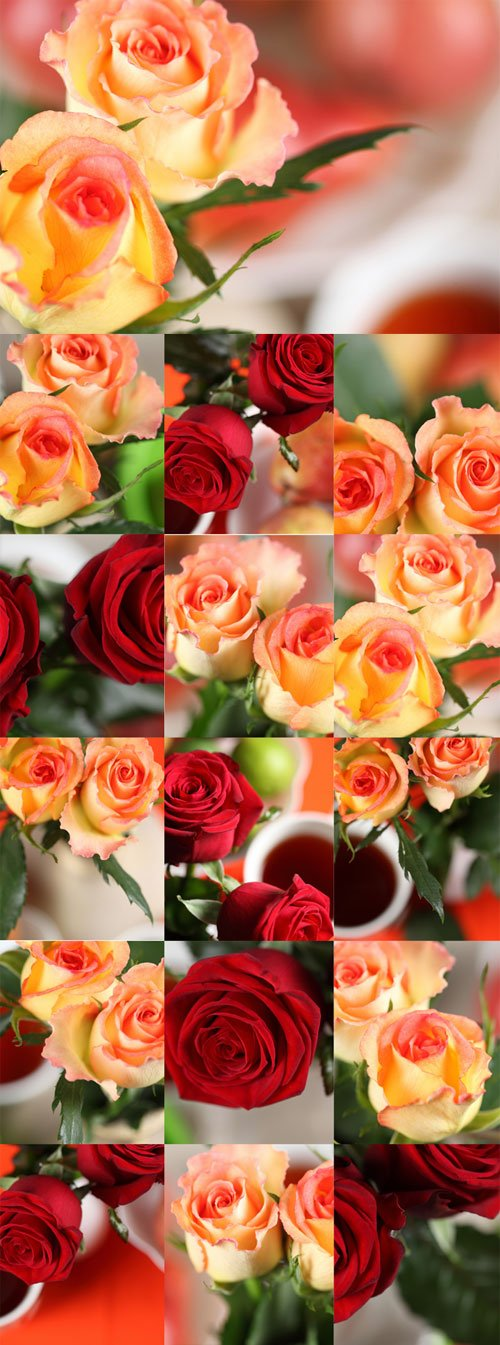 Elegant red and yellow roses Raster Graphics