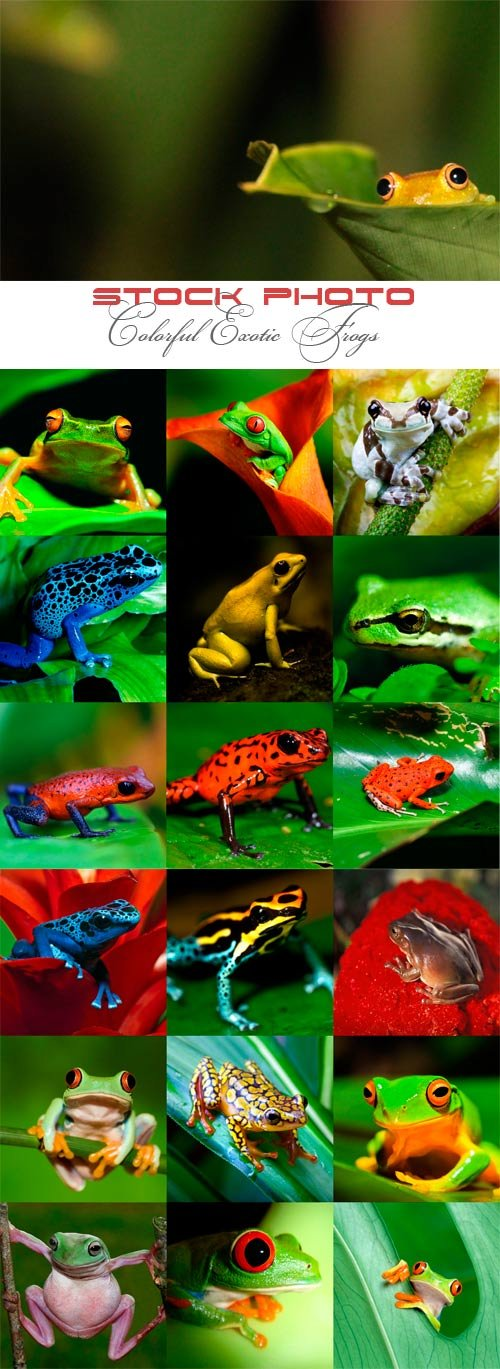 Colorful exotic frogs
