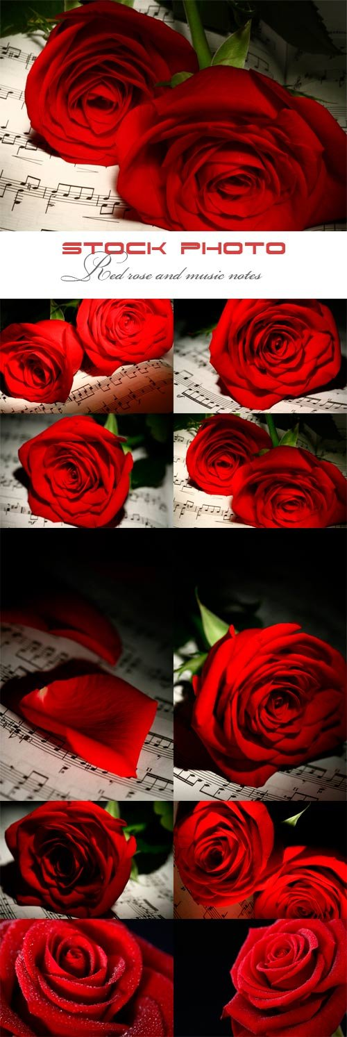 Red rose and music notes
