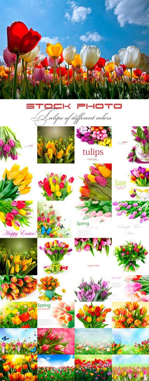 Tulips of different colors