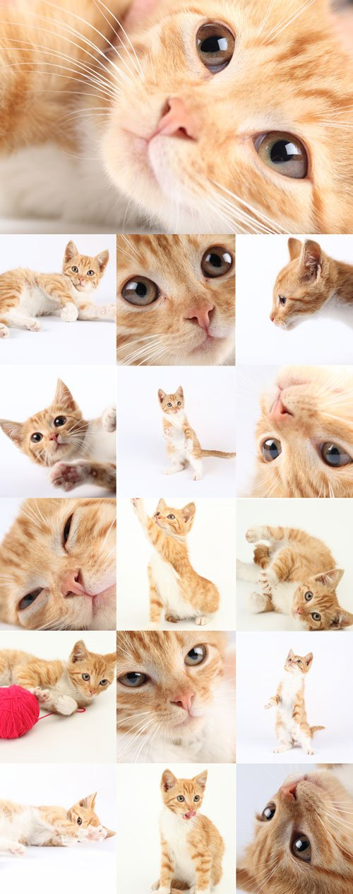Cute ginger kitten bitmap