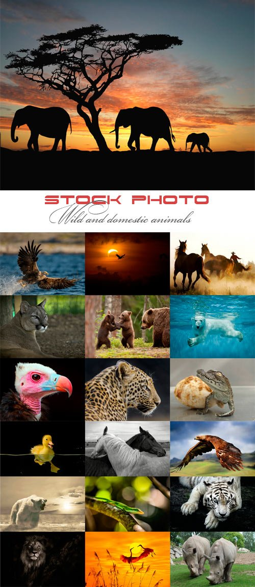 Wild and domestic animals raster graphics