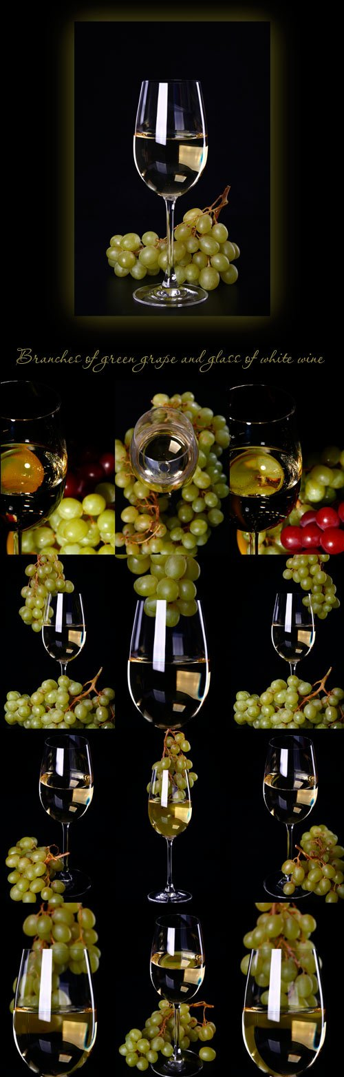 Branches of green grape and glass of white wine
