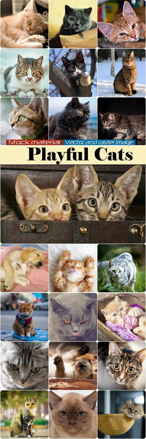 Playful cats and kittens