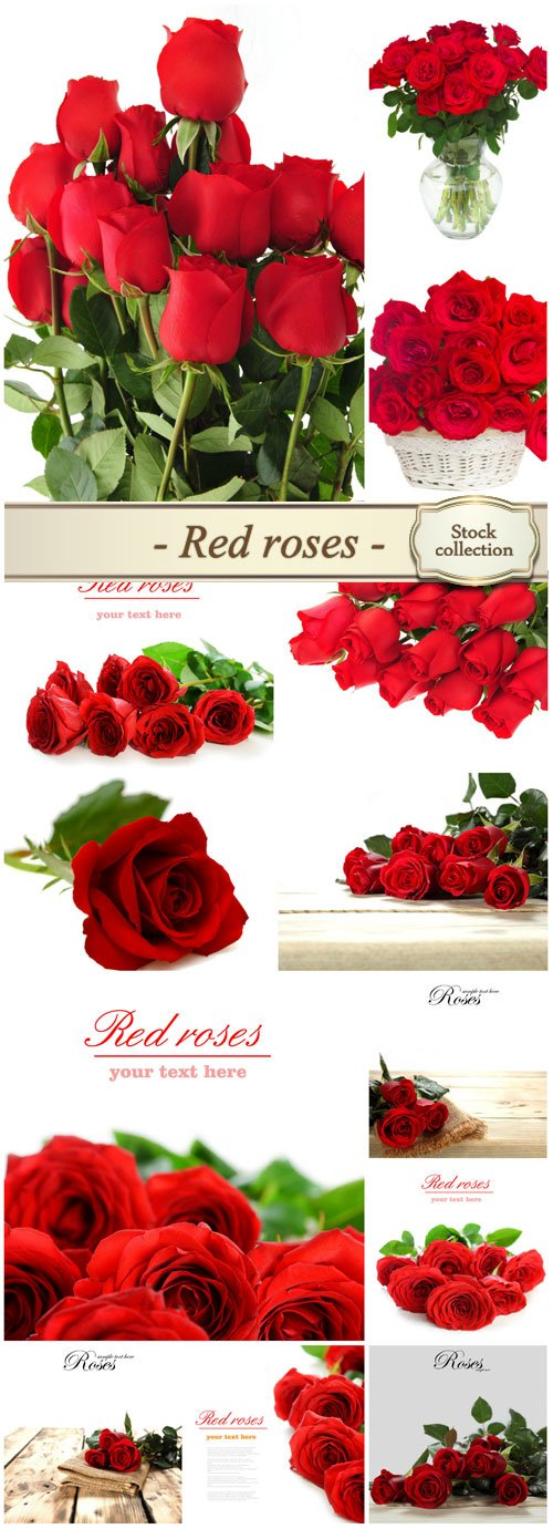Red roses, bouquets of flowers on a white background - Stock photo