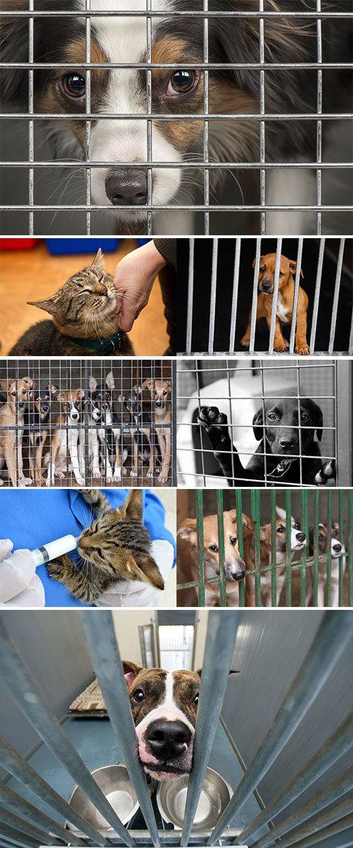 Stock Image A shelter for homeless animals