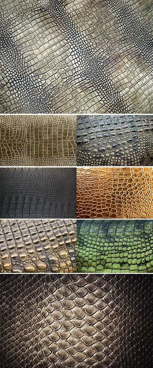 Stock Image Crocodile skin