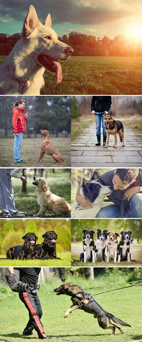 Stock Image Training dogs