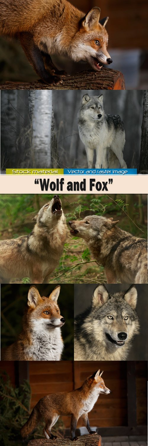 Wolf and red fox