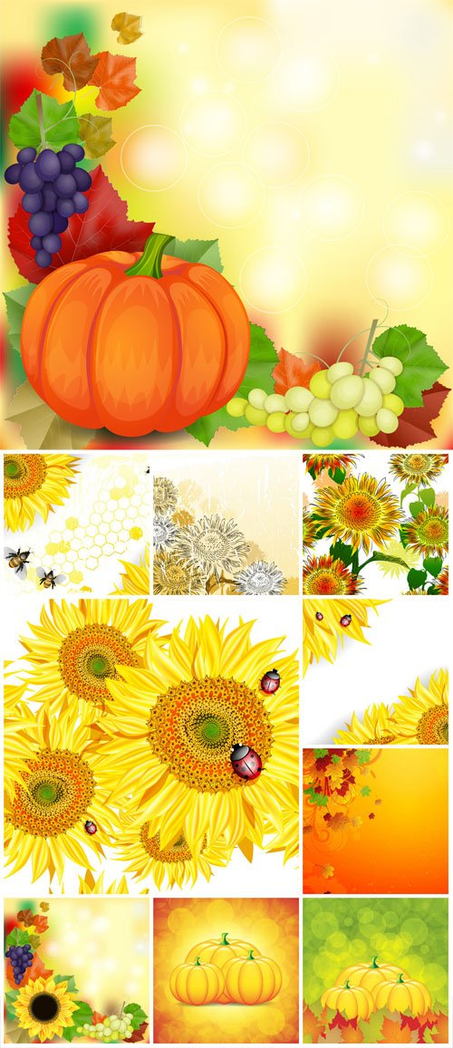 Autumn vector background, pumpkins and sunflowers
