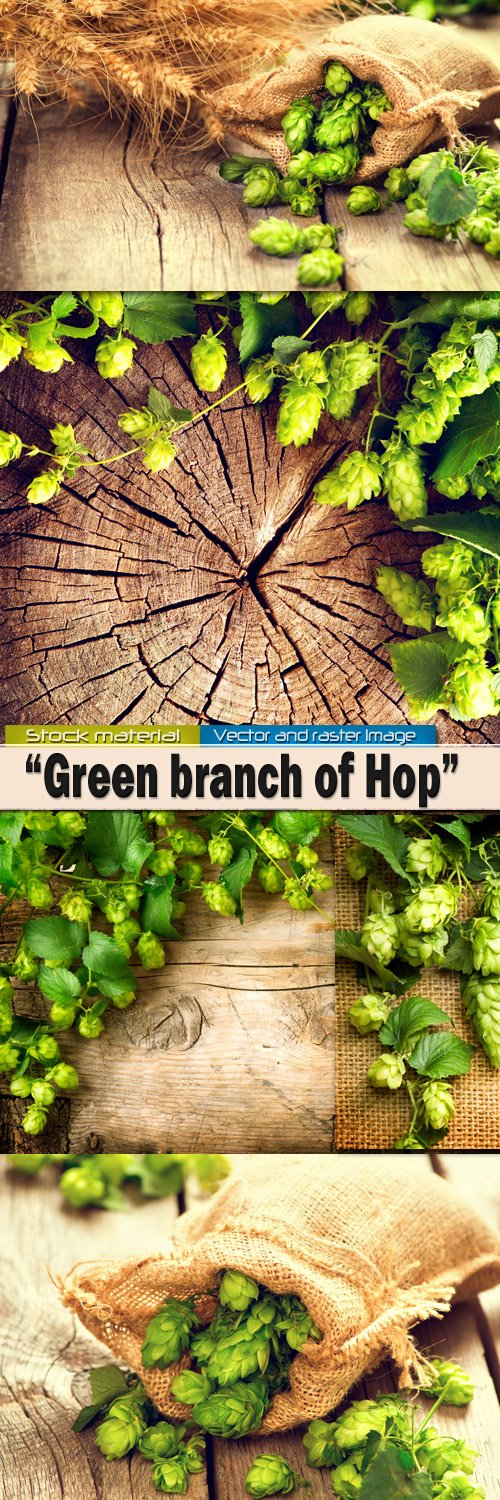 Green branch of hop against a tree