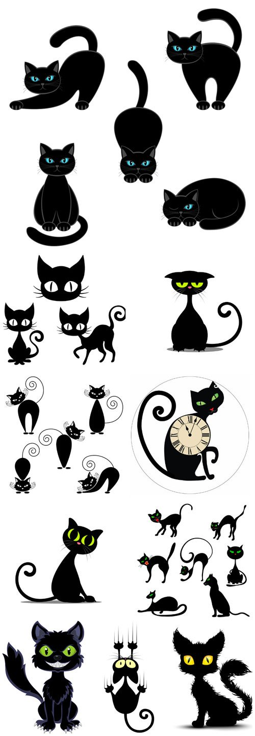 Black cat in different poses