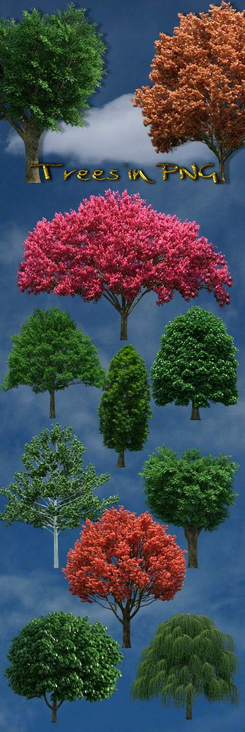 Trees on a transparent background PNG