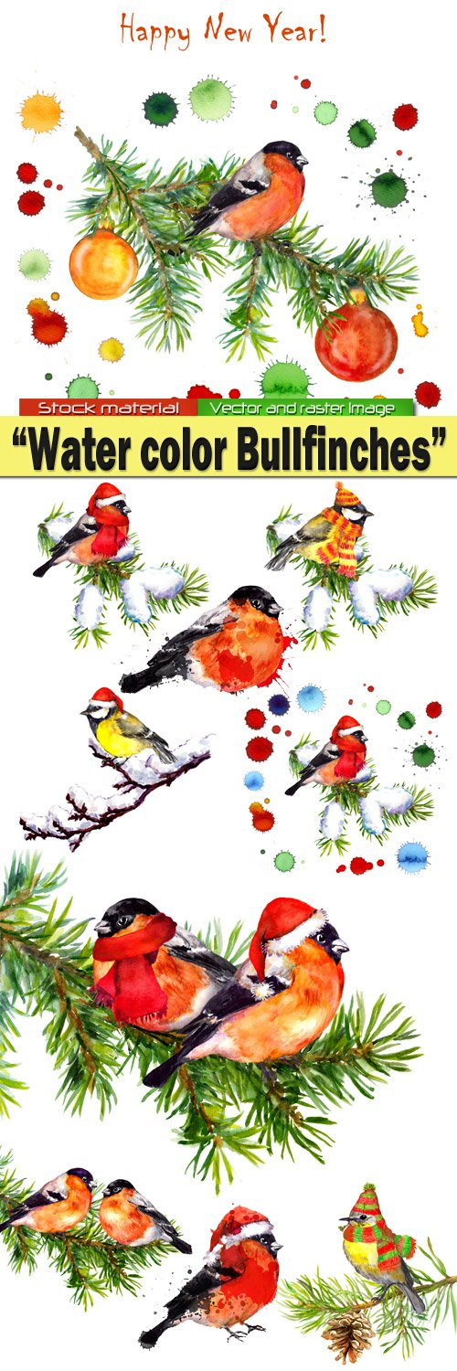 Water color Bullfinches