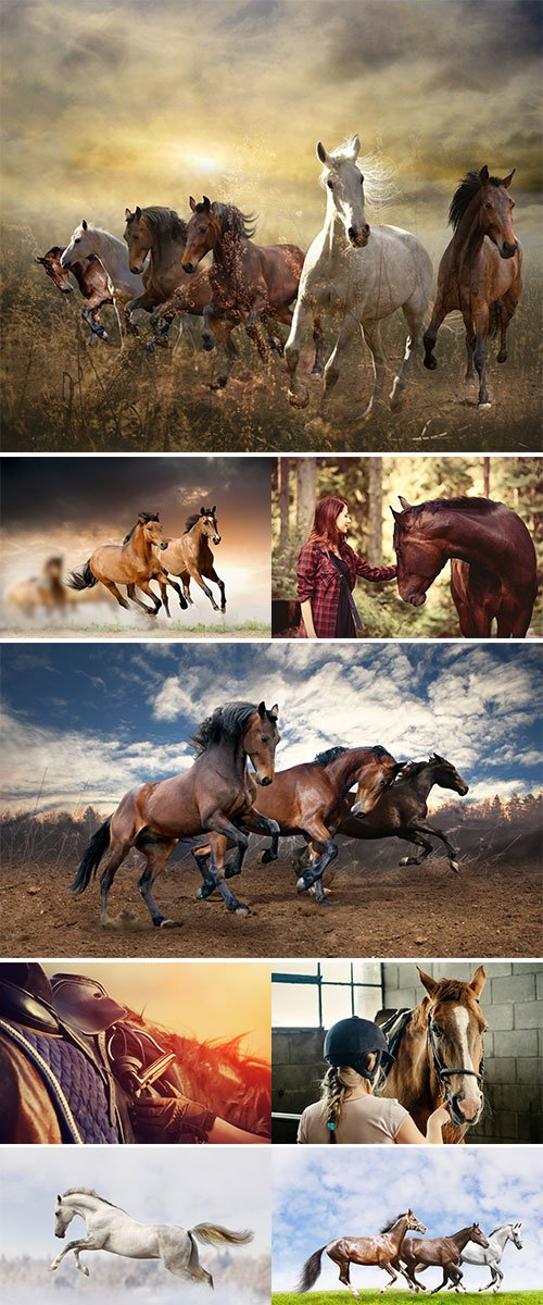 Stock Image Horse and people