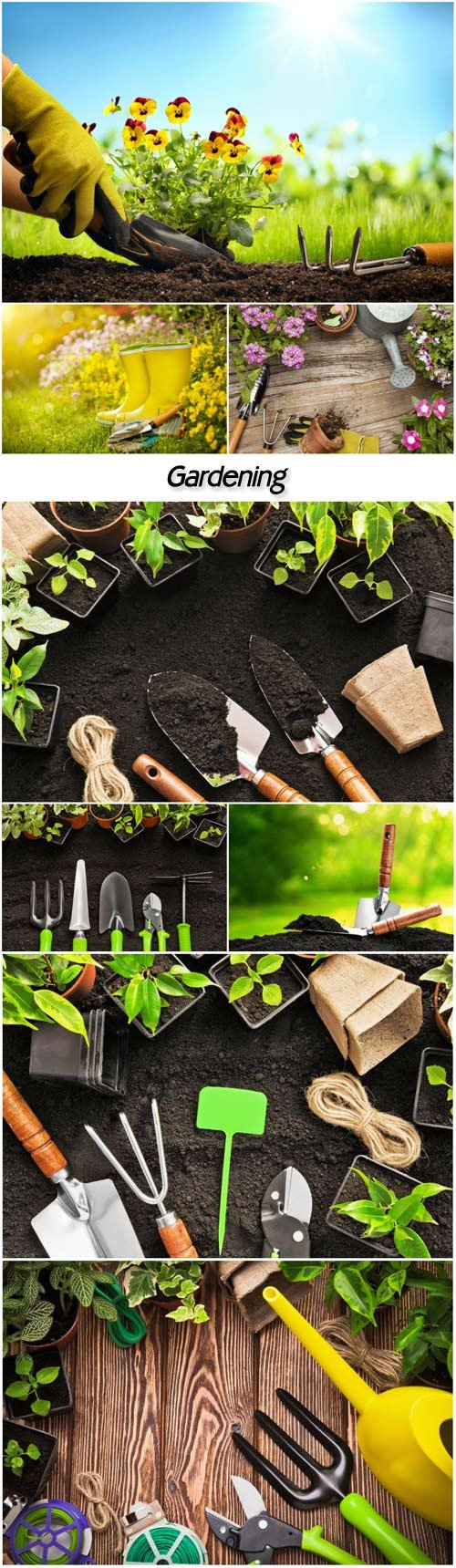 Gardening, flowers and gardening tools