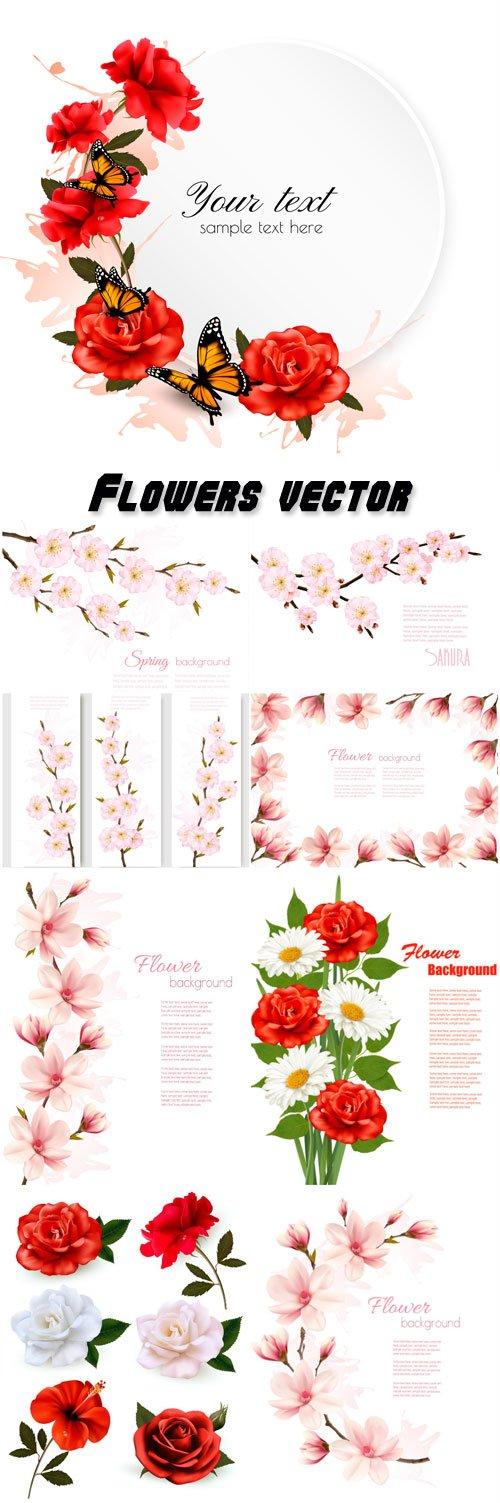 Flowers vector, roses, daisies, cherry, magnolia