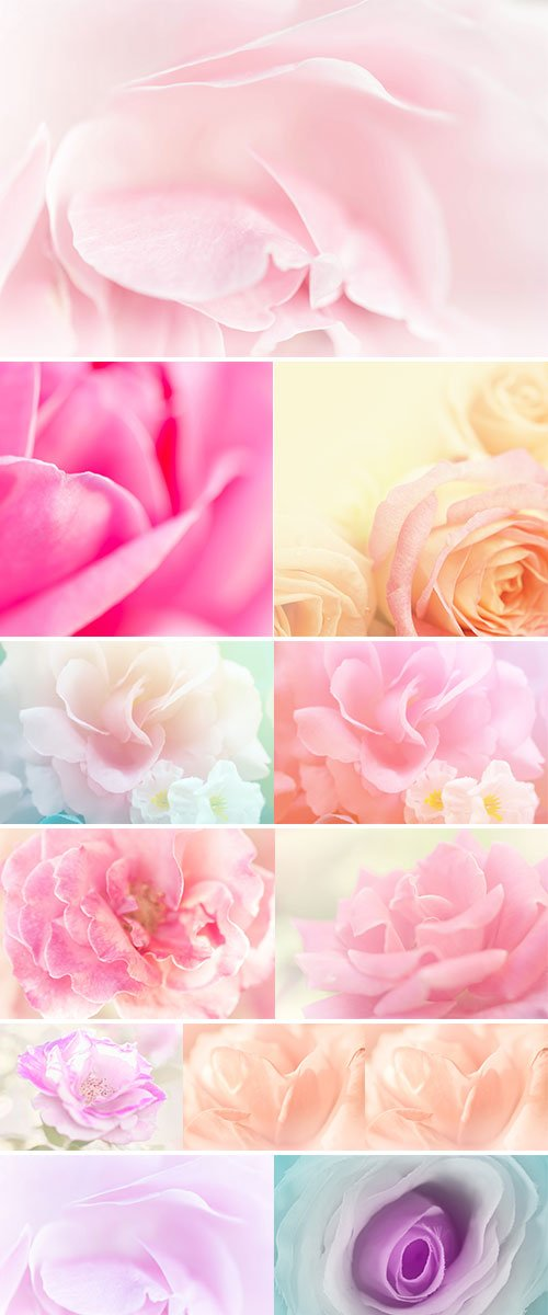 Stock Image Rose soft pink blur background