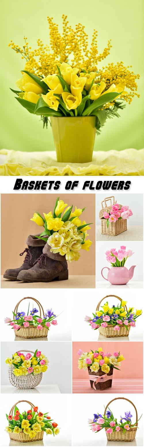 Baskets of flowers, tulips, mimosa