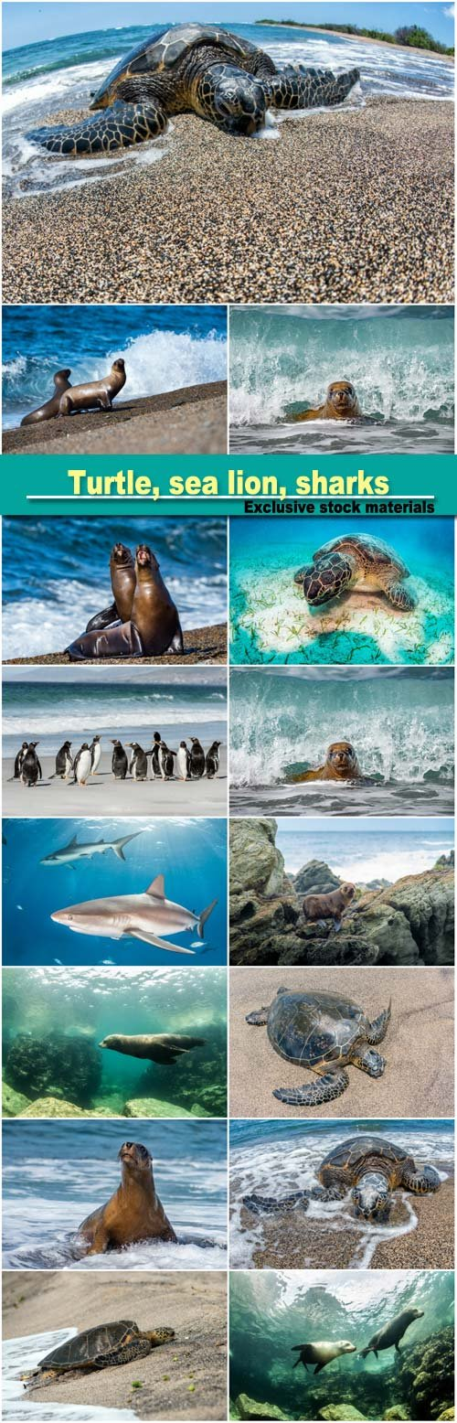 Green turtle white on sandy beach, sea lion, penguins, sharks