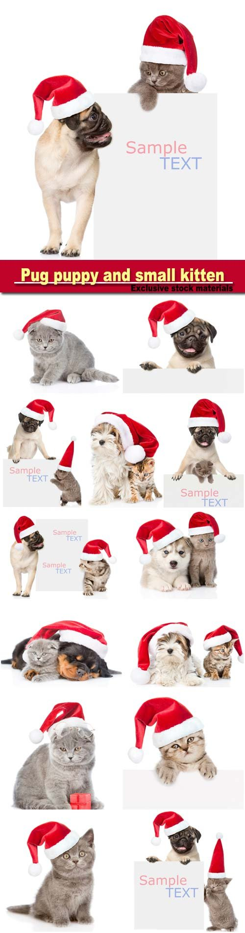 Pug puppy and small kitten with red Santa Claus hats above white
