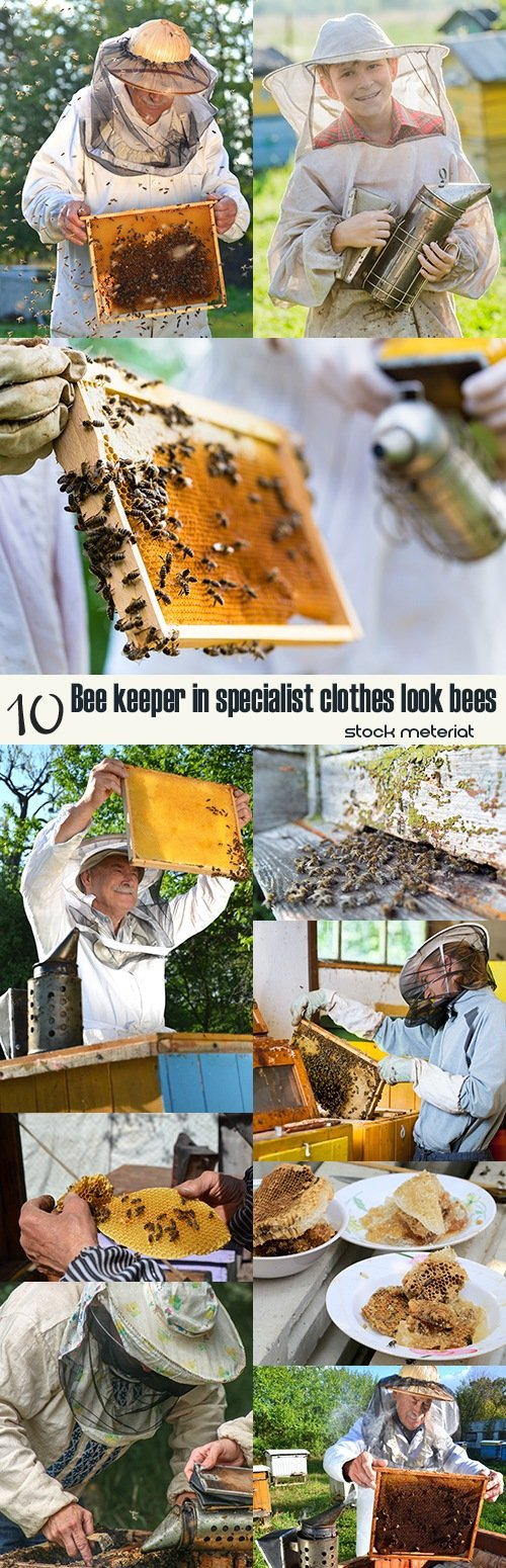 Bee keeper in specialist clothes look bees