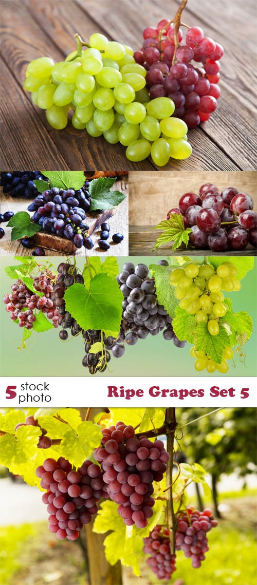Photos - Ripe Grapes Set 5