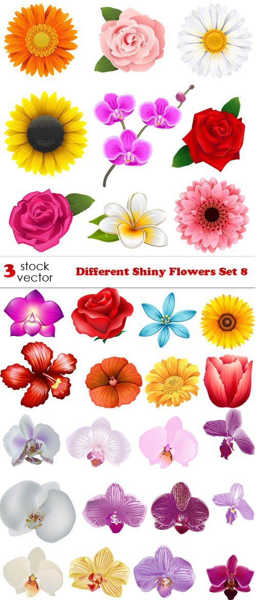 Vectors - Different Shiny Flowers Set 8