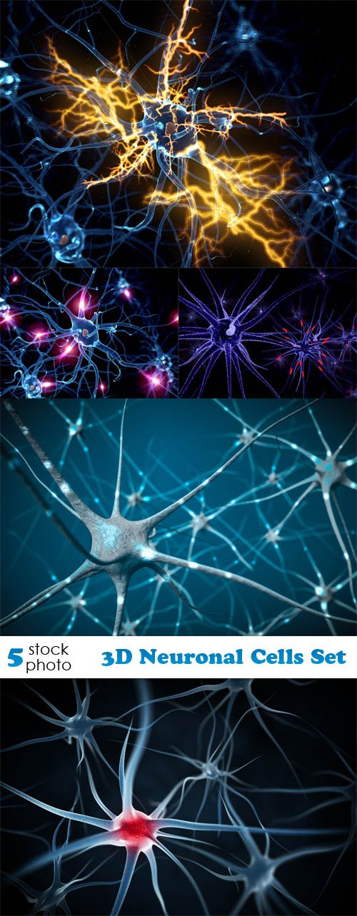 Photos - 3D Neuronal Cells Set