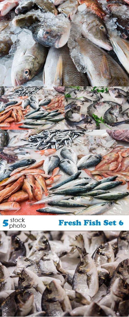 Photos - Fresh Fish Set 6