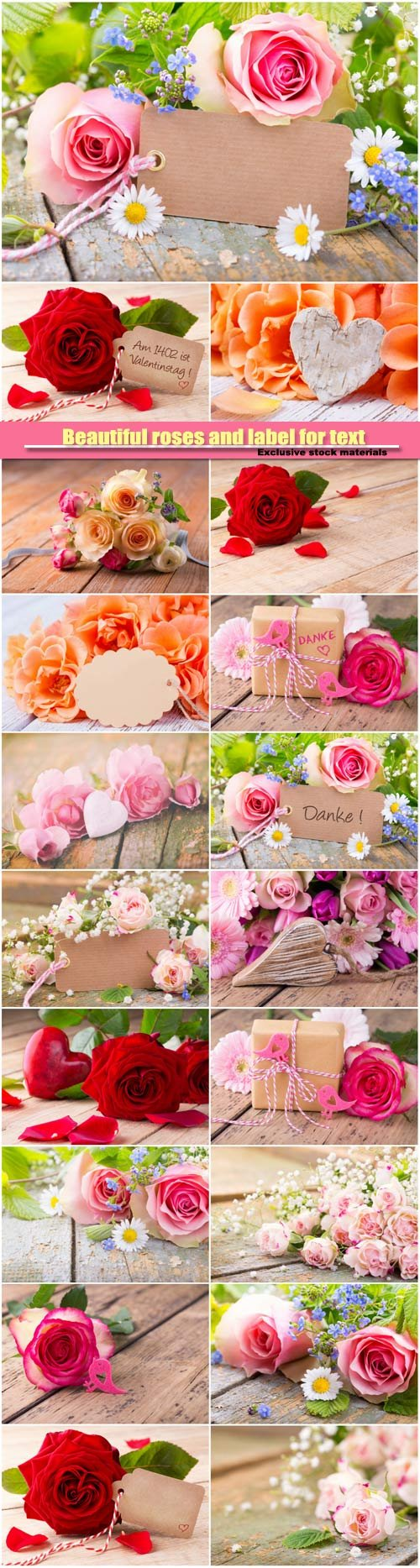 Beautiful roses and label for text