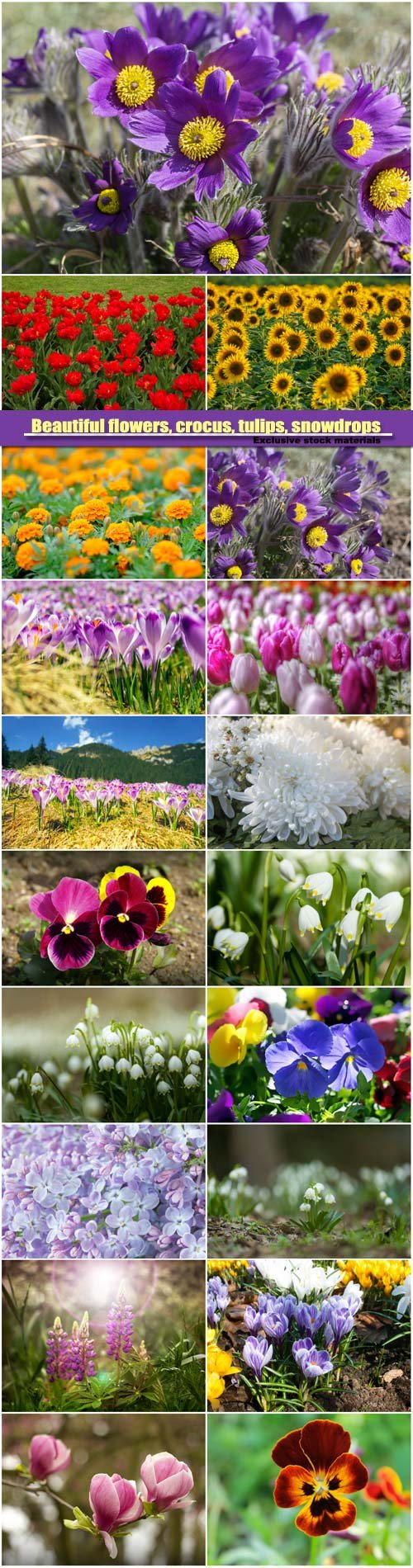 Beautiful flowers, crocus, tulips, snowdrops and lilac