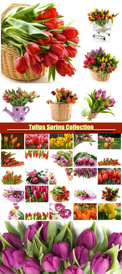 Tulips Spring Collection