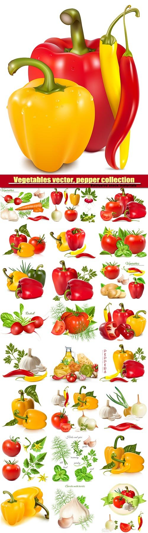 Vegetables vector, pepper collection