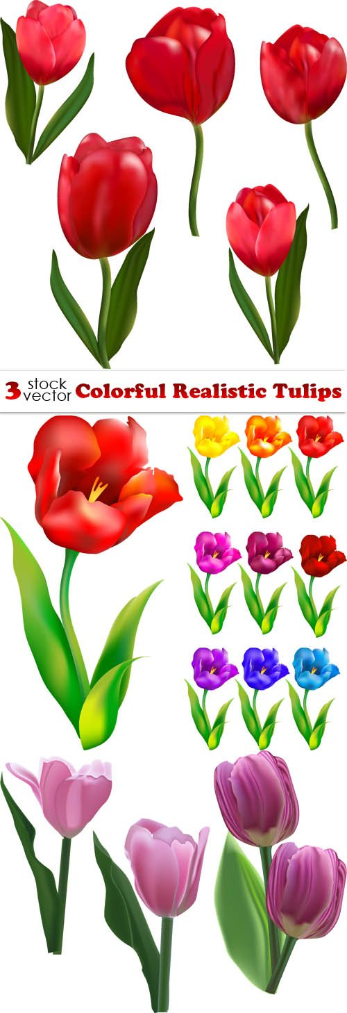 Vectors - Colorful Realistic Tulips