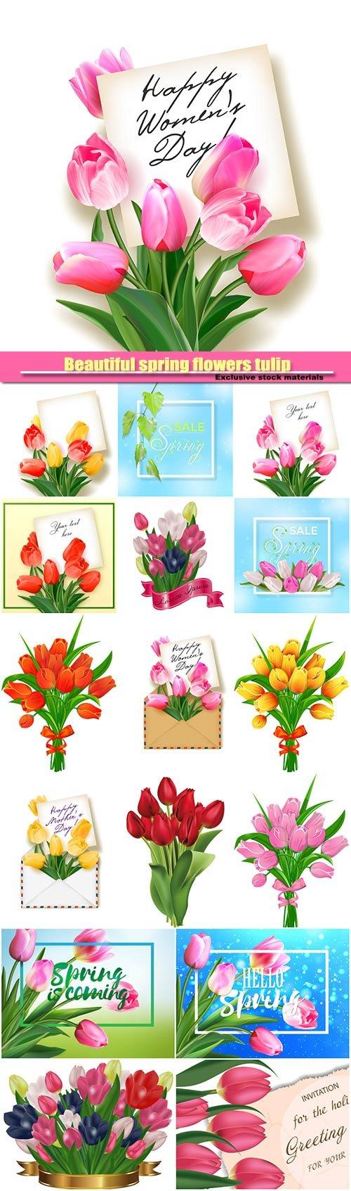 Beautiful spring flowers tulip vector