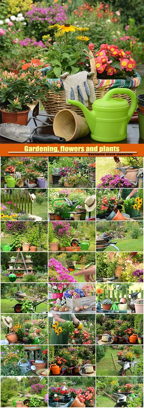 Gardening, flowers and plants