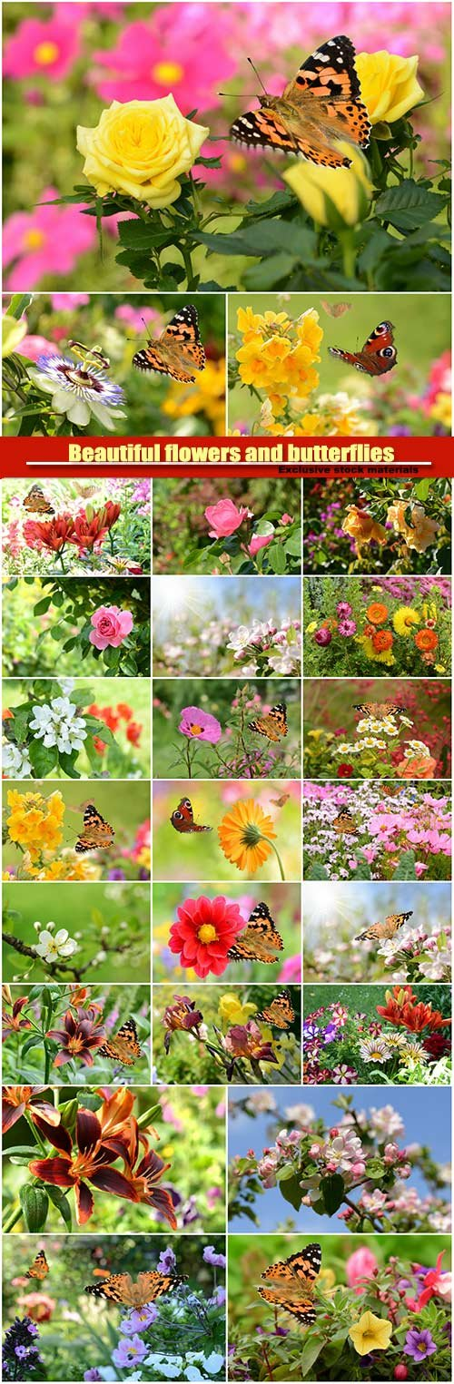 Beautiful flowers and butterflies