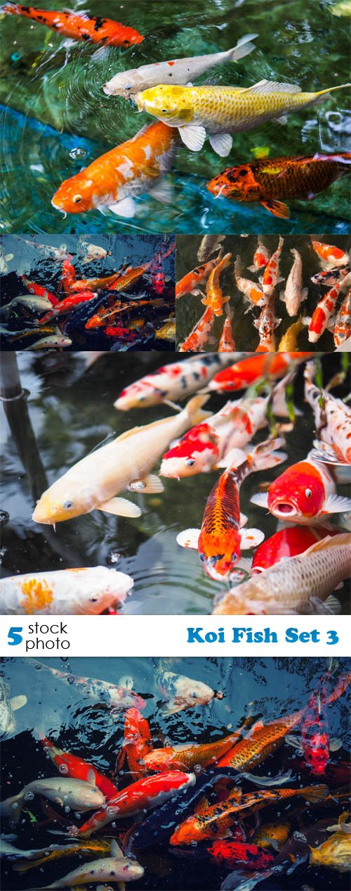 Photos - Koi Fish Set 3