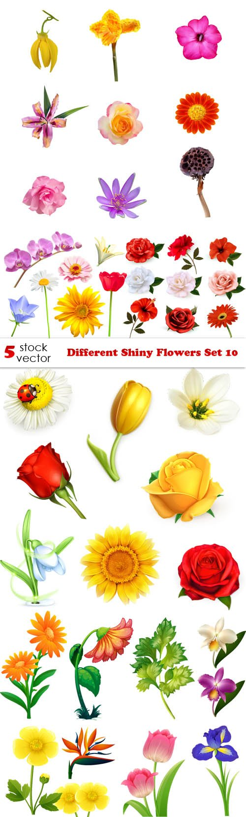 Vectors - Different Shiny Flowers Set 10